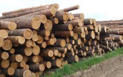 Узнайте, как получить бесплатный лес от государства на строительство частного дома
