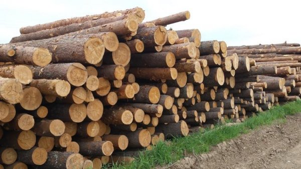 Лес под строительство дома