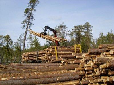 кому положен лес на строительство дома